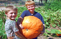 Big Max Heirloom Pumpkin Thumbnail