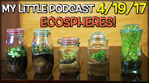 My Little Podcast LIVESTREAM | Self Sustaining Ecosystem in a Jar